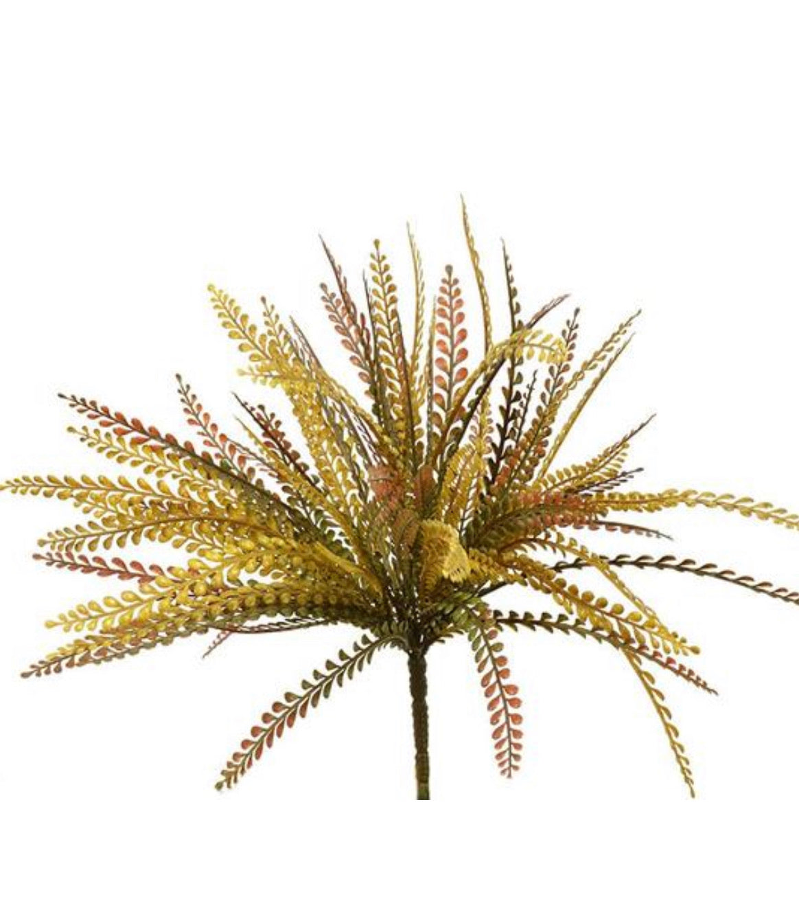 greenery bush - button fern - green / burgundy