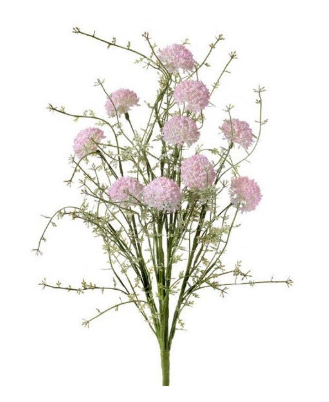 Wild allium bush, pink filler flowers