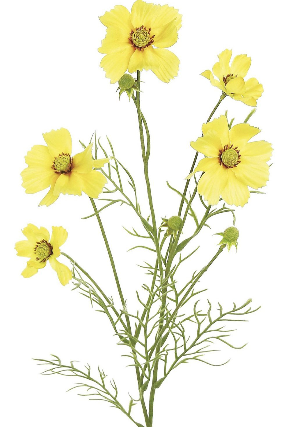 cosmos spray, yellow filler flowers