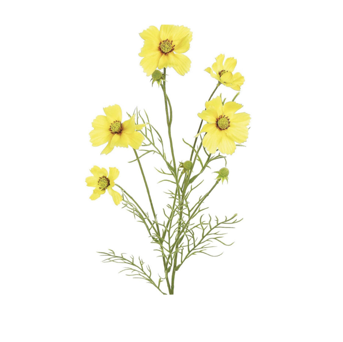 cosmos spray, yellow filler flowers - Greenery Market