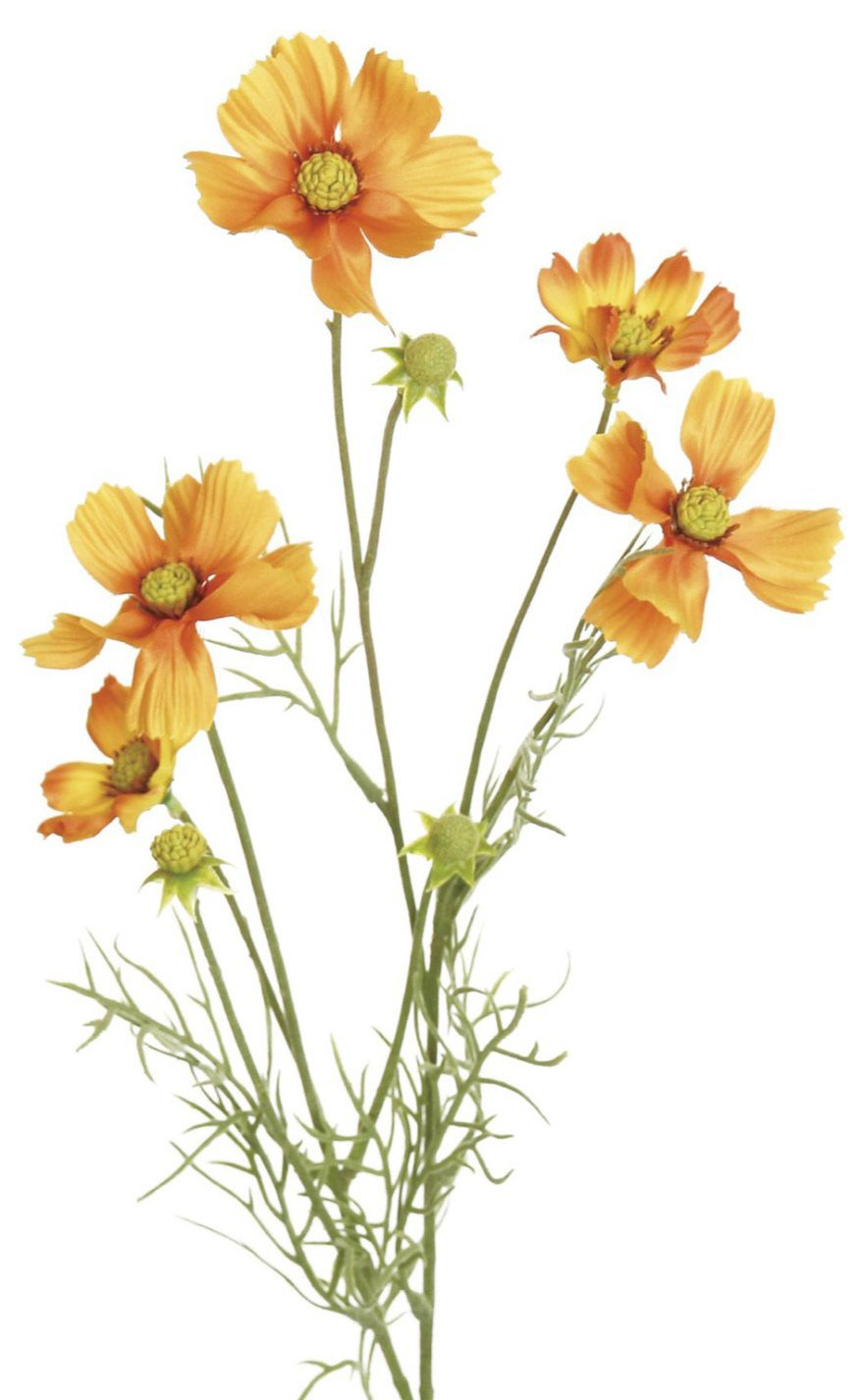 cosmos spray, orange filler flowers