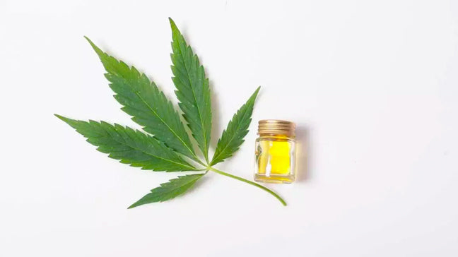 what's the difference between cbd and hemp oil
