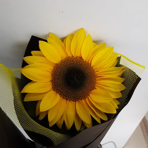 Single Wrapped large Sunflower - Gold Coast City Florist