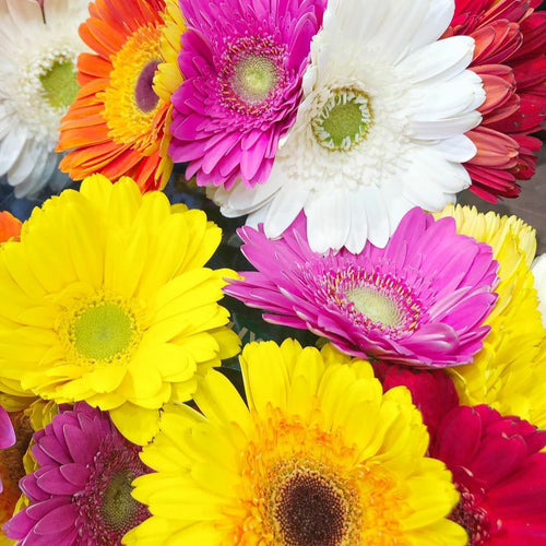 Florist Choice Gerbera box arrangement - Gold Coast City Florist
