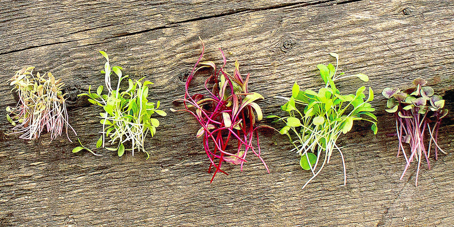 What can you do with microgreens?