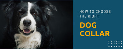 How to choose the right Dog Collar for your Dog ?