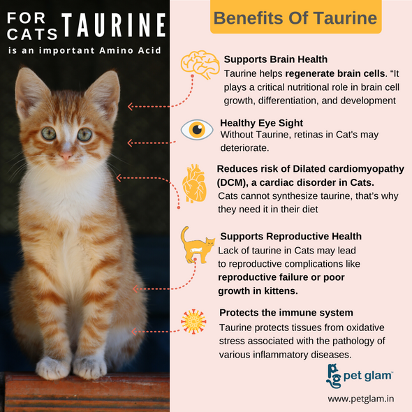 Taurine in Cat food importance of Taurine in Cat food cat food whiskas cat food cat food online kitten food persian cat food whiskas kitten food meow cat food wet cat food whiskas wet cat food royal canin persian cat food whiskas wet food kitten food online canned cat food kitten wet food orijen cat food