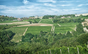 The Meruzzano district is located in the municipality of Treiso and comprises about 6 ha of land divided into three vineyards planted with Nebbiolo for Barbaresco, Pinot Noir, Moscato and Chardonnay. Here the soil composition is characterised by calcareous grey marl, with less compact soils, still rich in minerals, which convey freshness and a pleasurable drinkability.