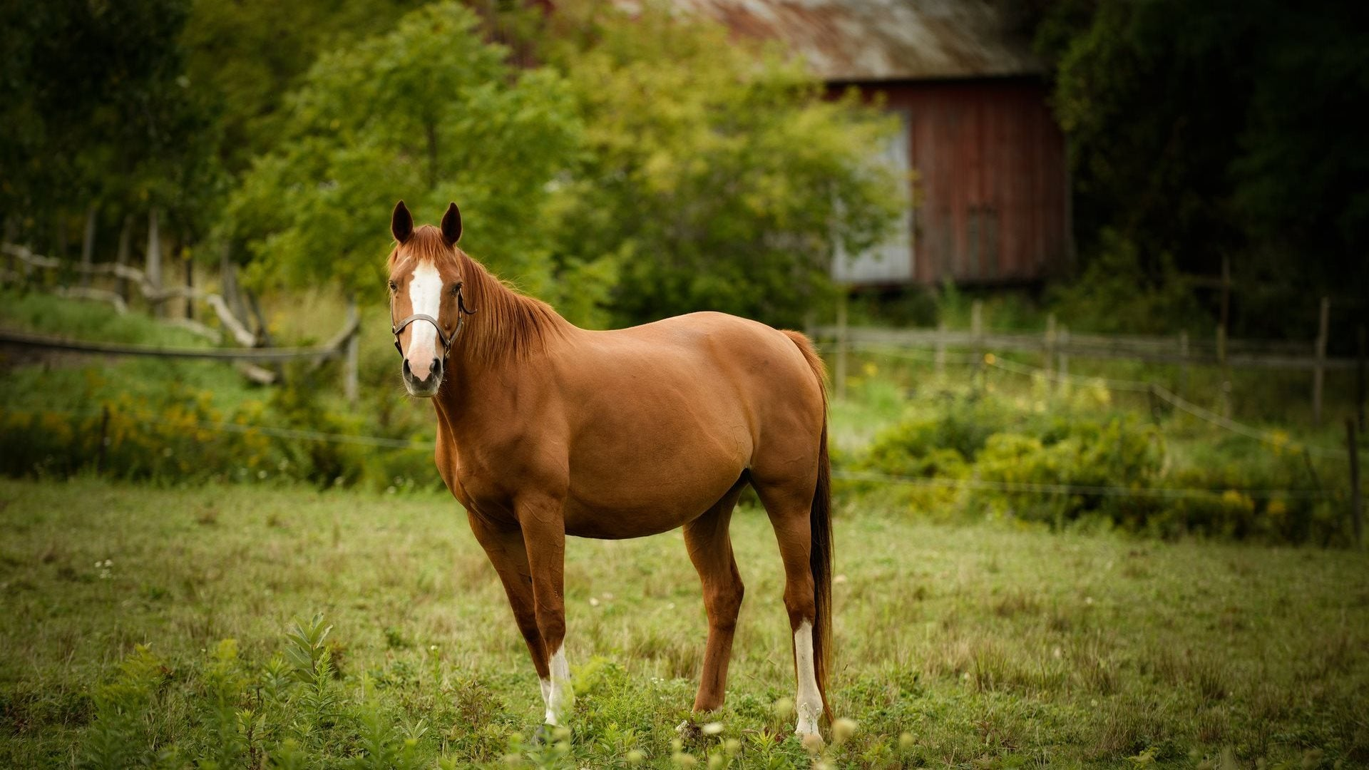 Horse standing in green pasture