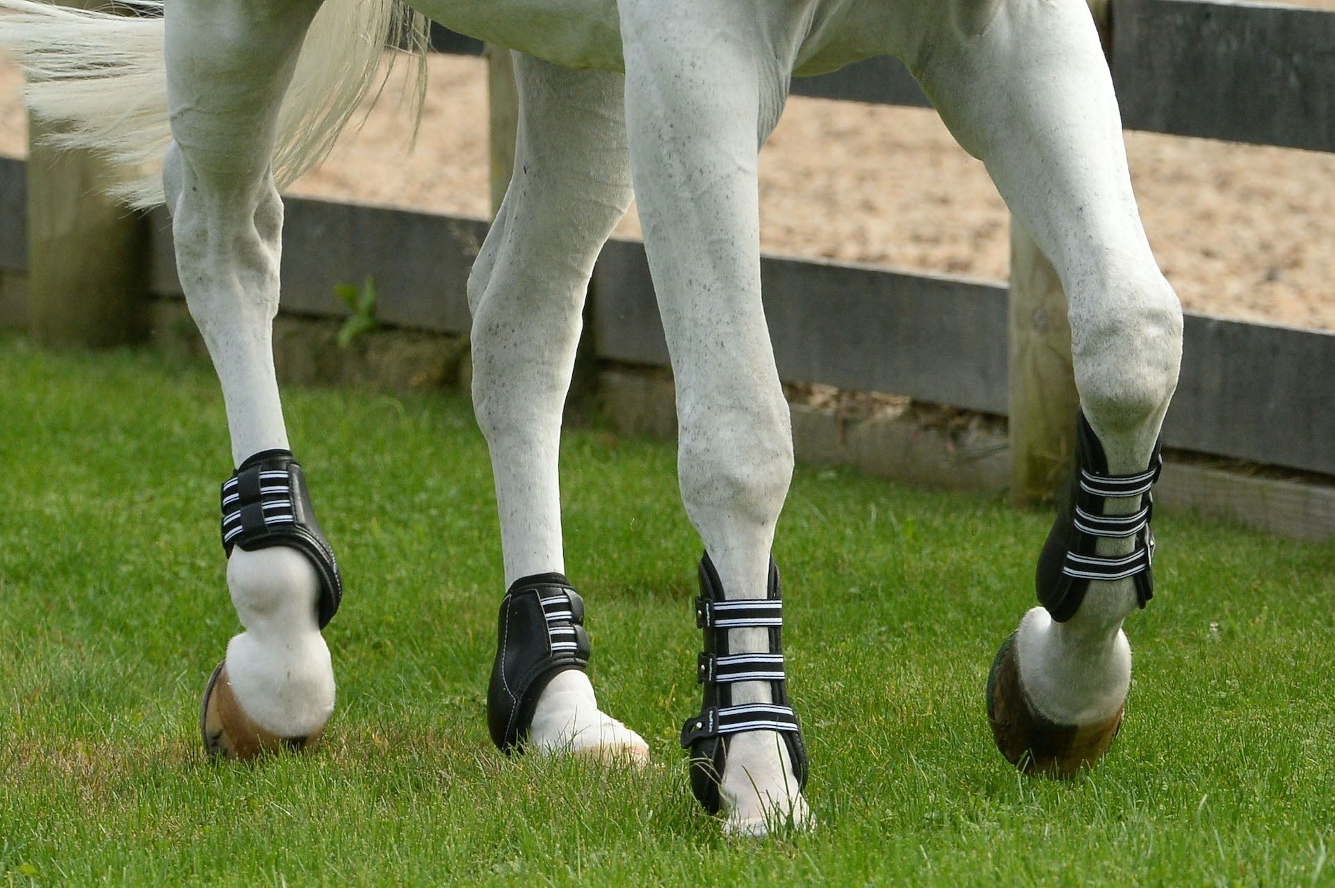 Horse trotting with front and hind horse boots