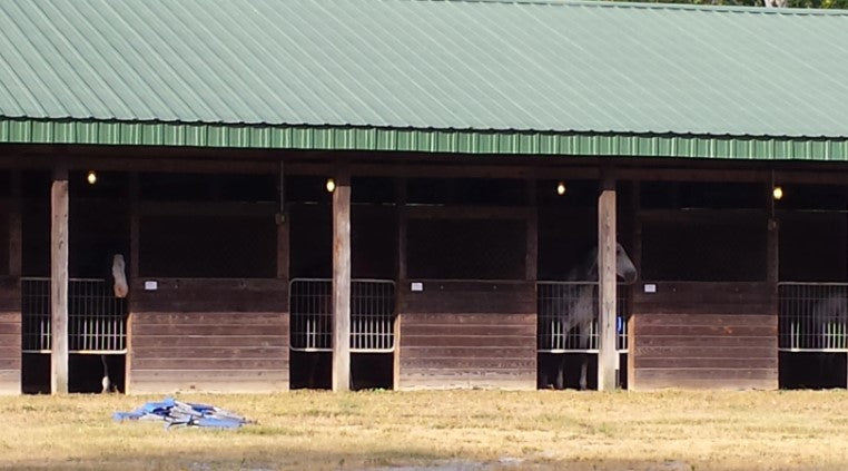 Horse in stalls after evacuating a hurricane