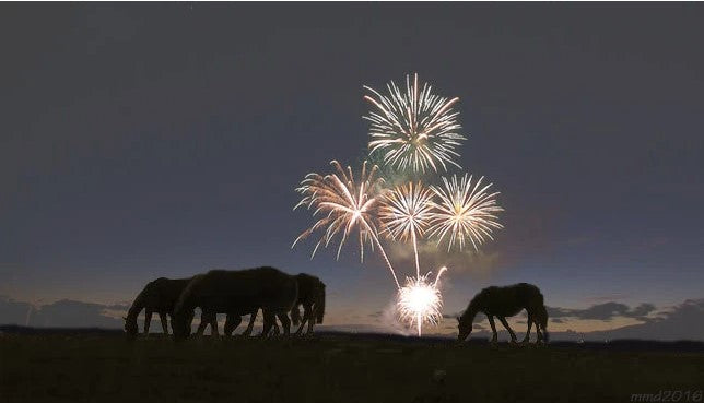 Horses with fireworks in background