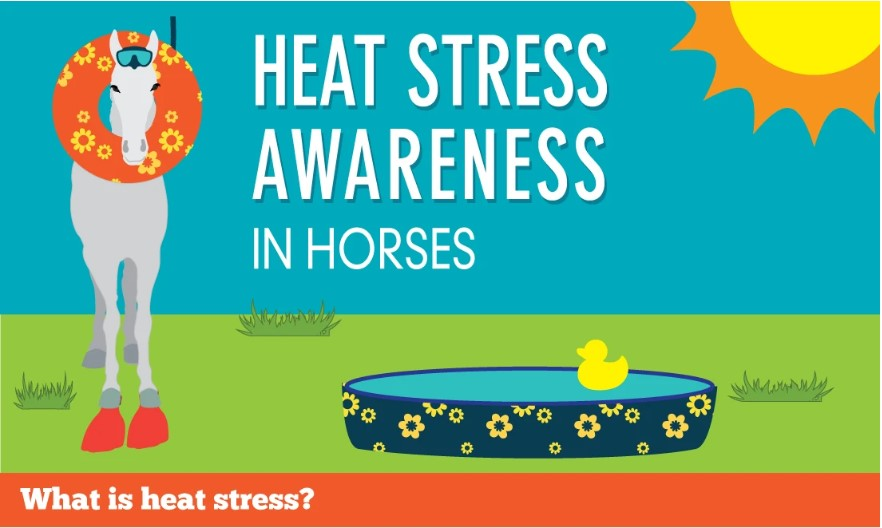 Horses & Heat Stress From Our Friends At Horsedvm.com
