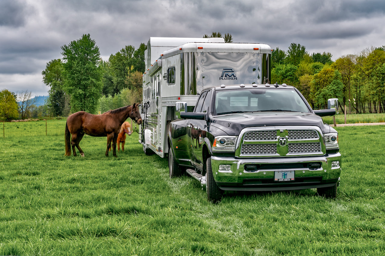 horse trailer with horses