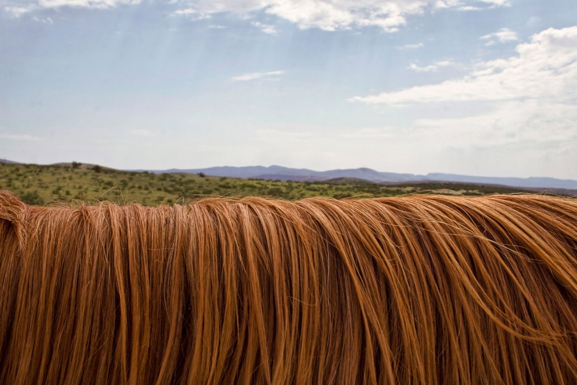 How To Pull A Horse's Mane