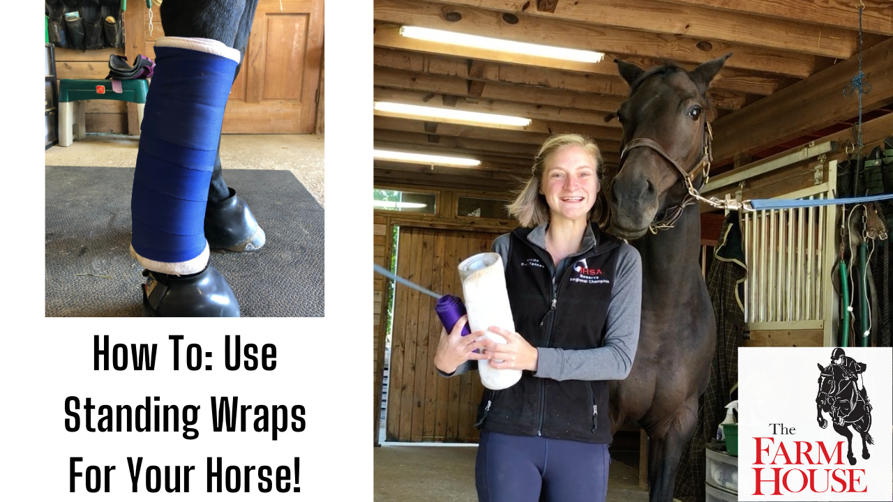 How to Wrap Your Horse's Legs