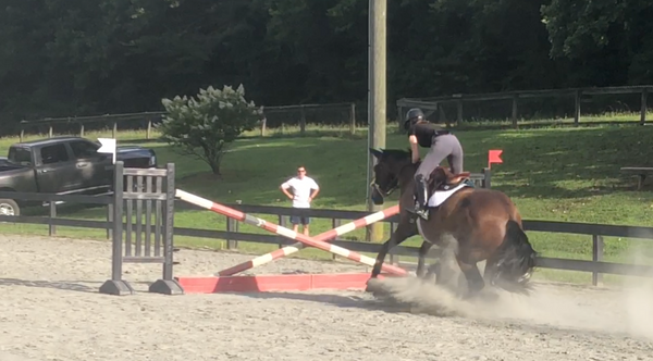 Bay horse refusing jump