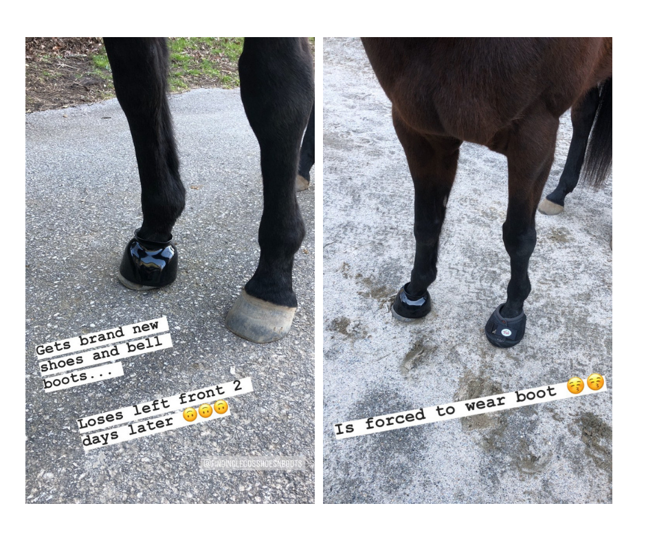 Horse that pull shoes