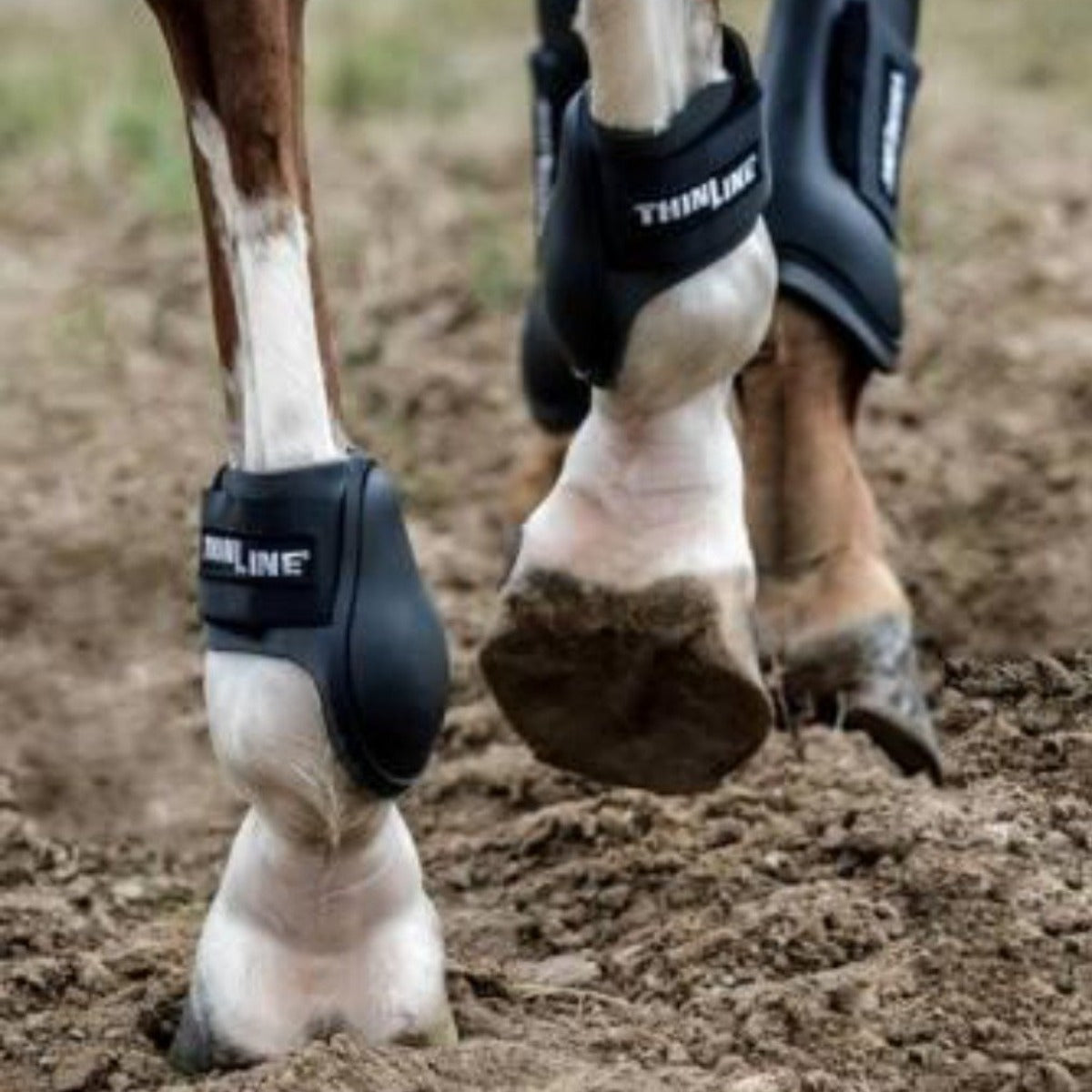 ThinLine Ankle Schooling Horse Boot