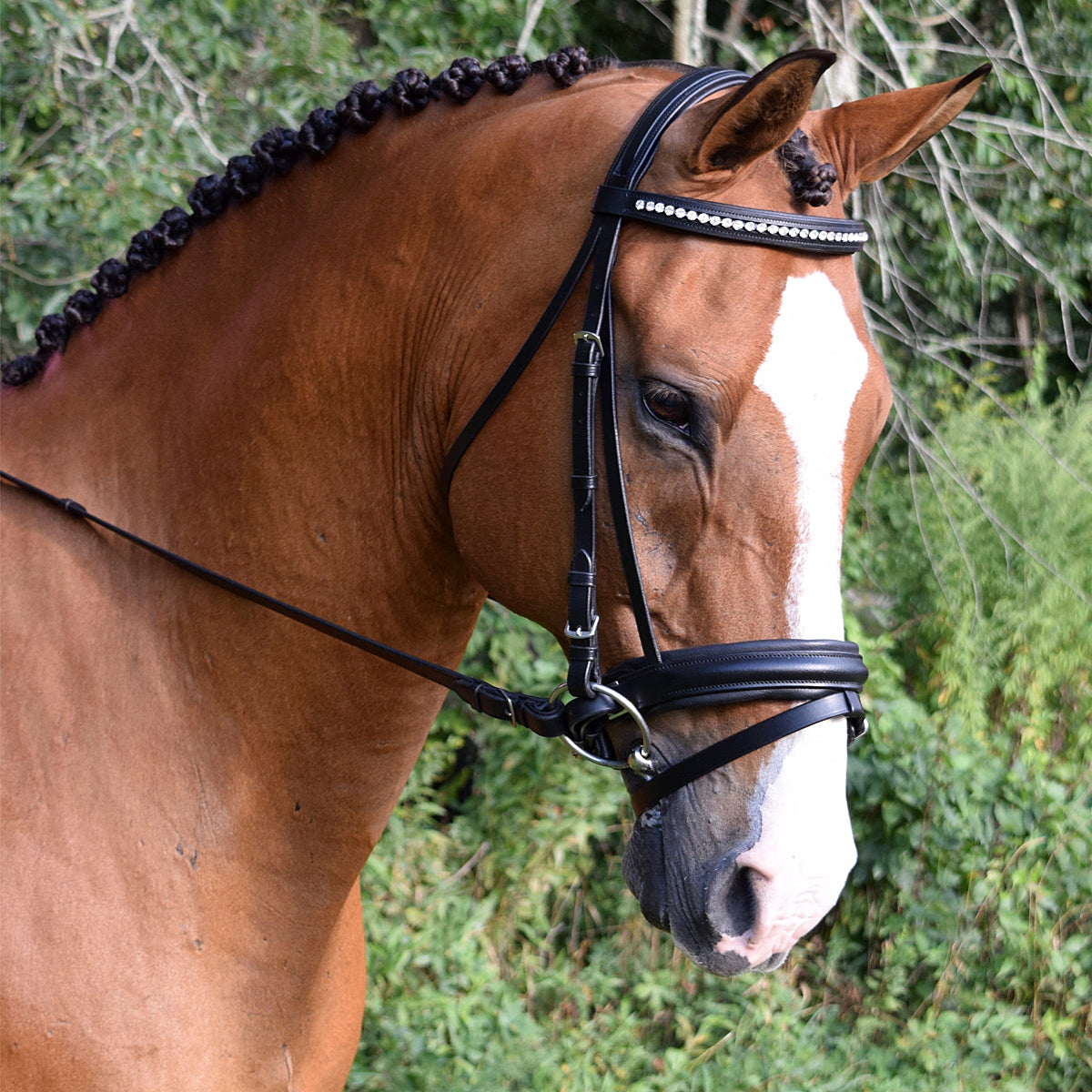 Black Oak by KL Select Larkspur Dressage Bridle