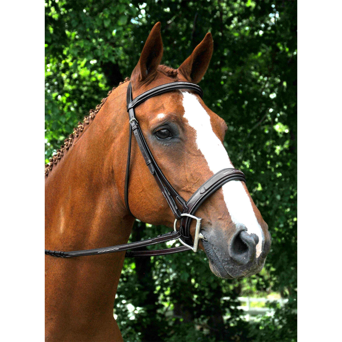 Red Barn by KL Select Tryon Hunter Bridle