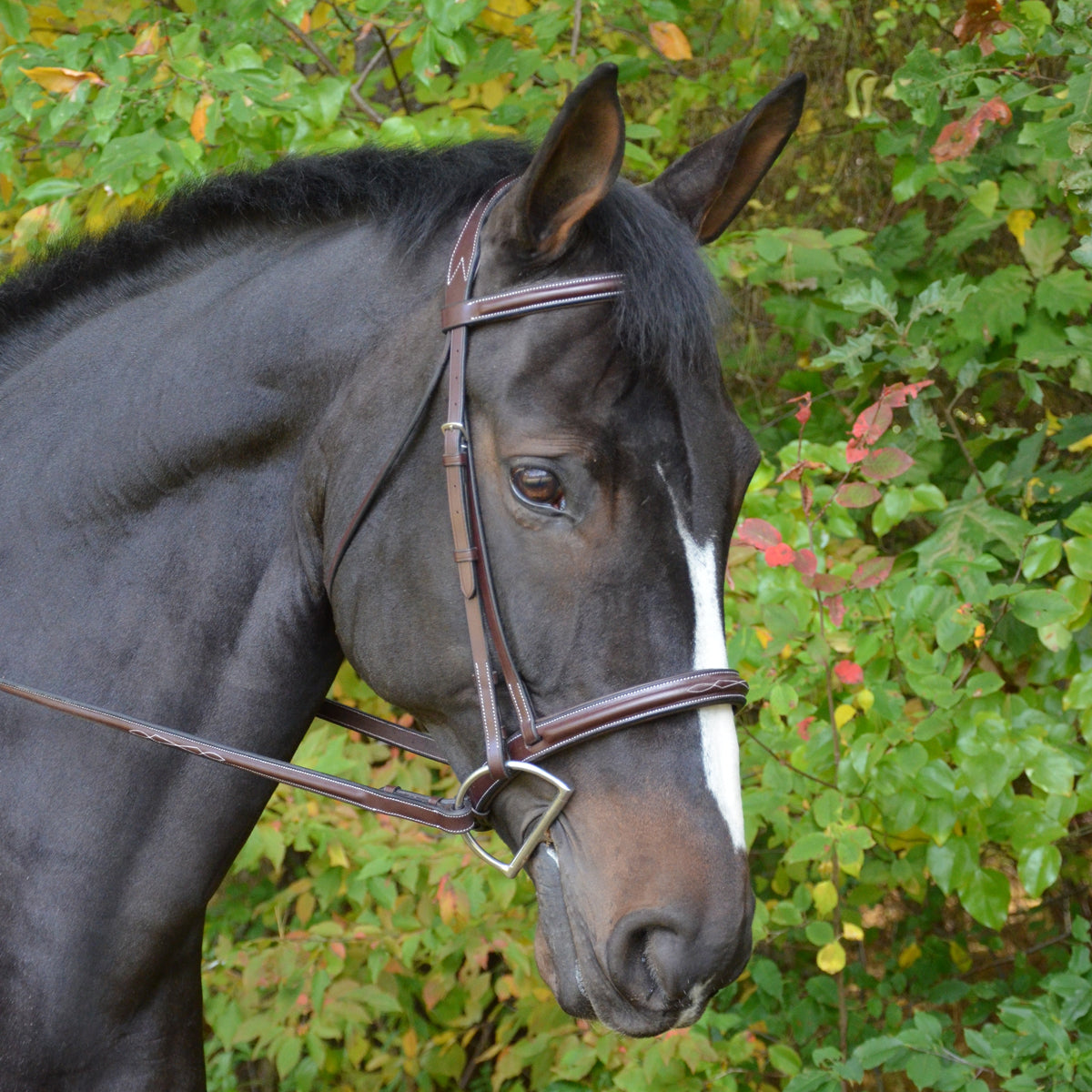 KL Select Black Oak Cyprus Hunt Bridle