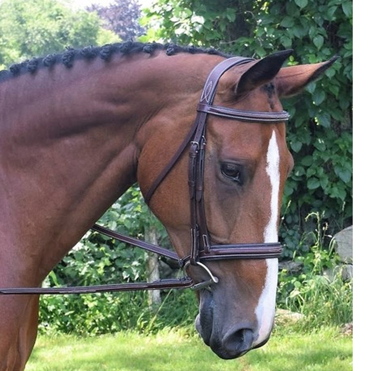 Black Oak Laurel Hunter Bridle