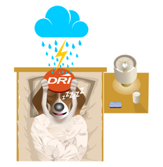 Take action now with the DRI Sleeper eclipse and Brollysheet special package.