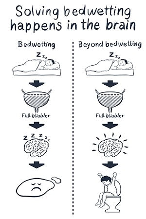 Diagram showing different brain response in a child who's learned not to wet the bed.