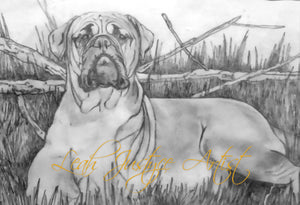 Pet Portrait Artist - Bullmastiff In Greylead