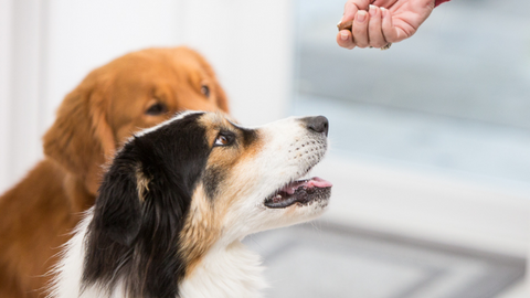 Providing your dog with a daily nutritional supplement can help prevent or provide relief from a health condition or aid in their overall health and wellness.