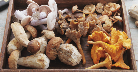 benefit of mushrooms for dogs
