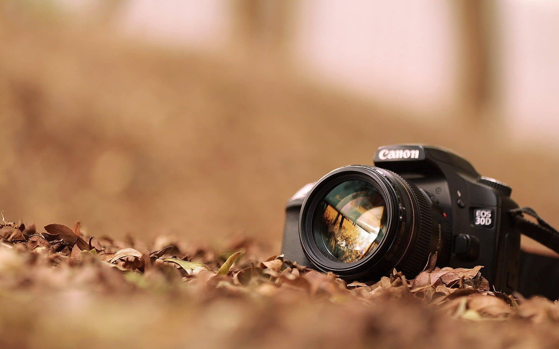 Becoming a Professional Photographer - Photography Education