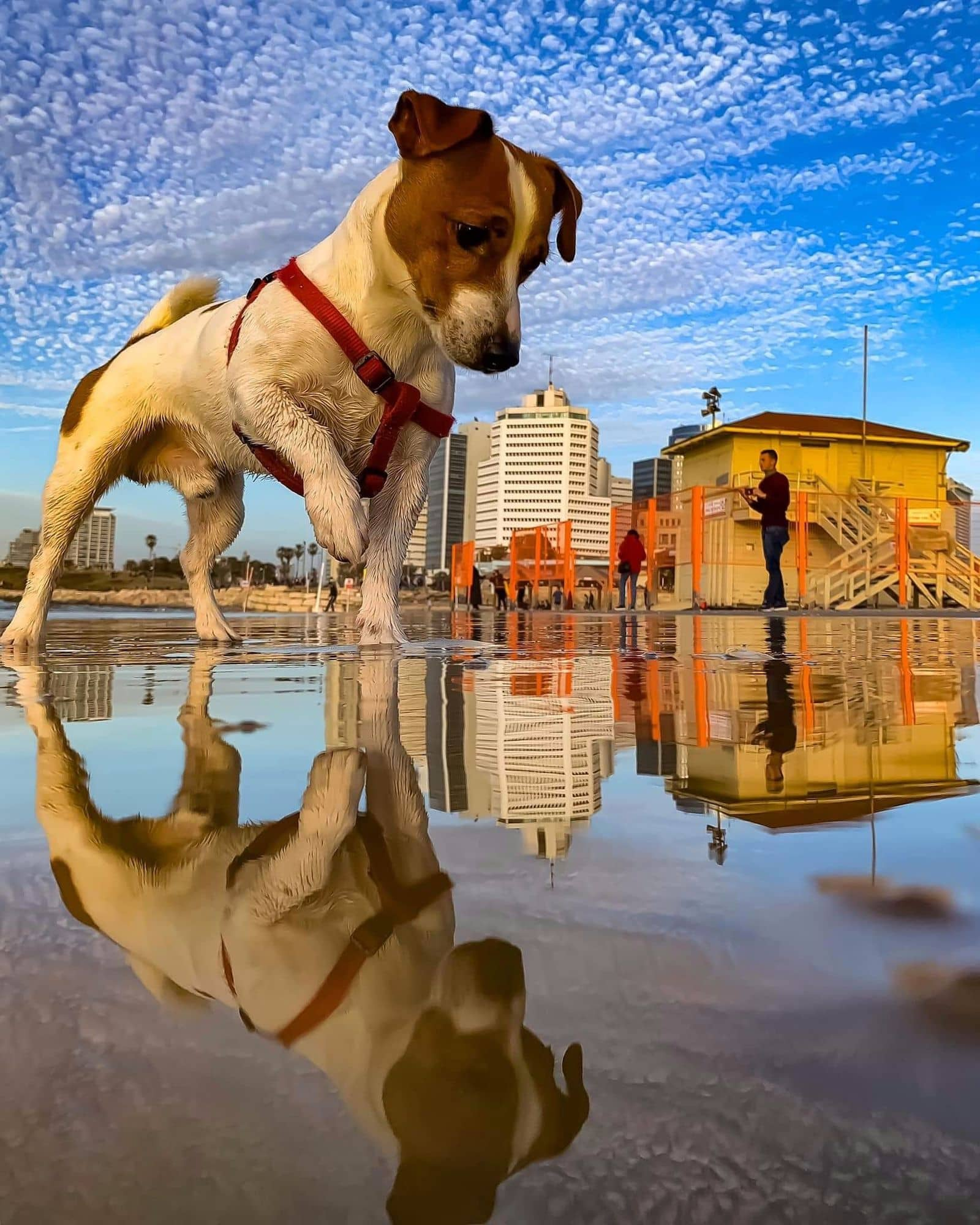 Best Forced Perspective Photography Examples for Photographers — Dog Reflection — Sunny 16