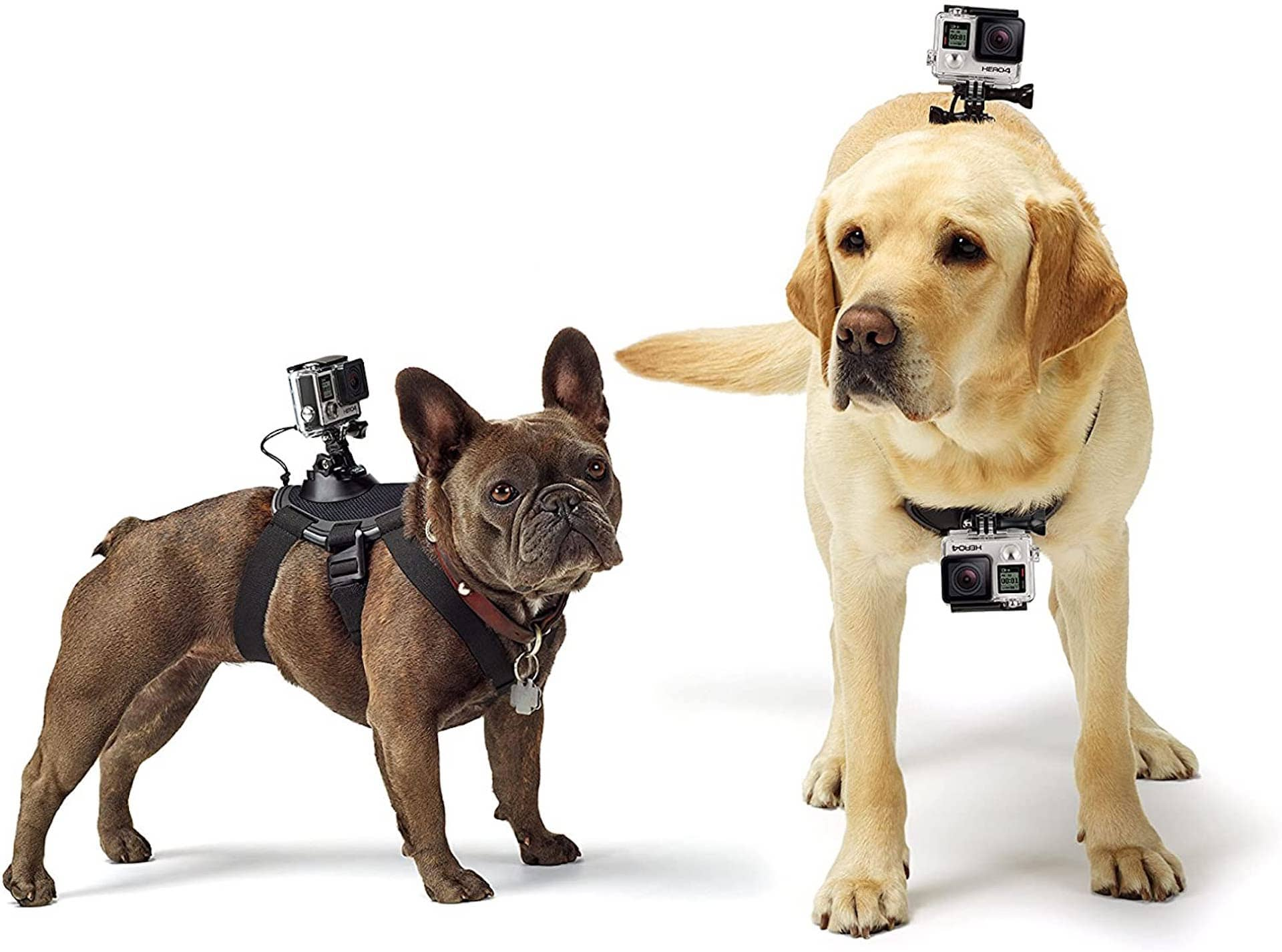 Best Photo Gifts for Photographers - Ideas Photographer Lovers - Gopro Mount Dog