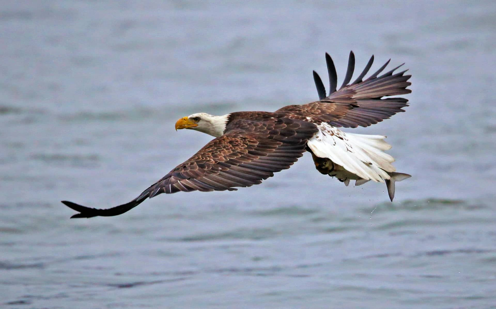 Nature Photography Bird Tips for Beginners — Eagle Telephoto Lens — Sunny 16