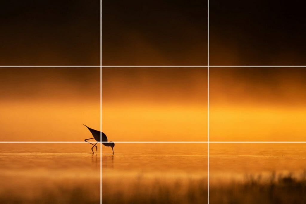 Rule of Thirds in Photography - Rule of Thirds Ninth Example - Sunny 16