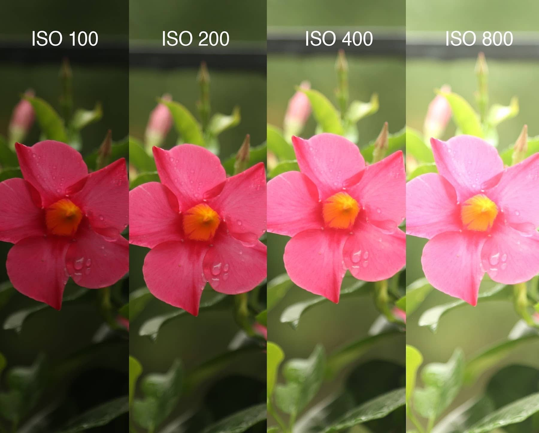 What Does ISO Stand for in Photography - Examples and Definition