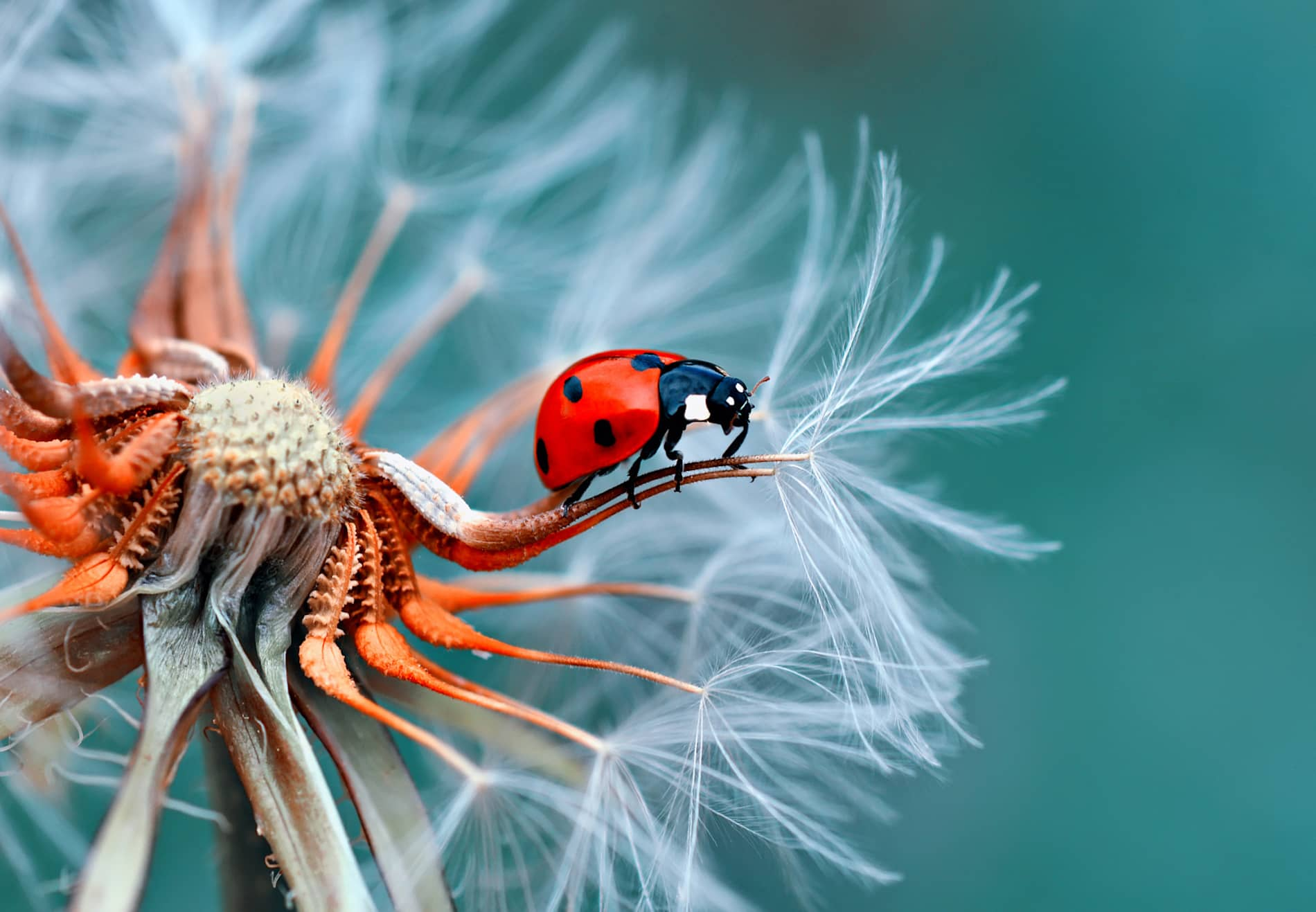 What is Macro Photography - Best Aperture