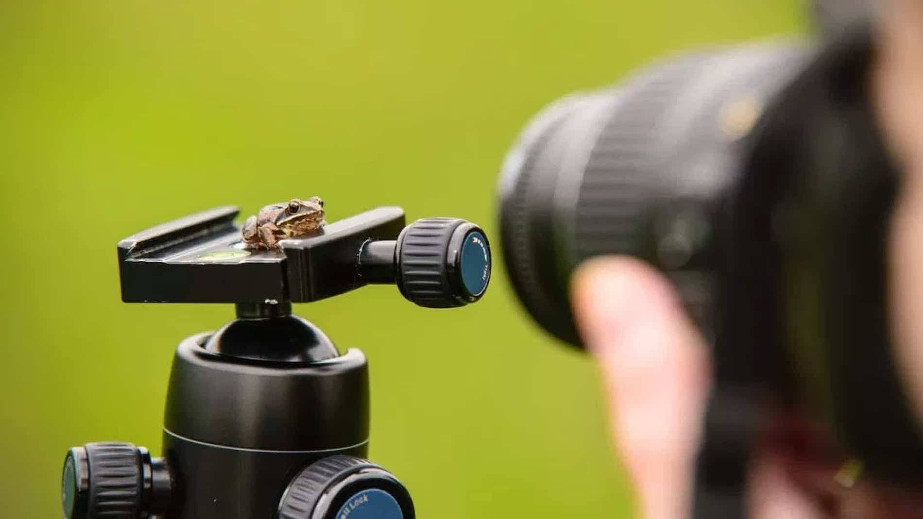 What is Macro Photography - Definition of Macro