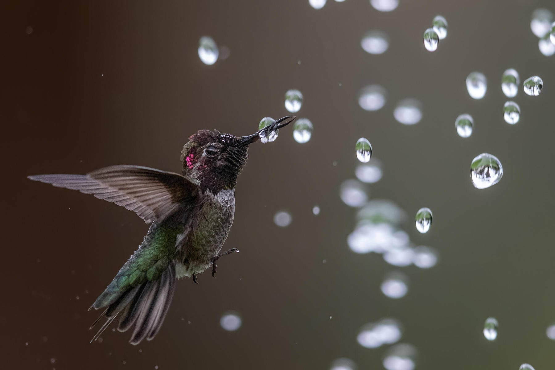 What is Photography - What is Photography Defined As - Bird Photos