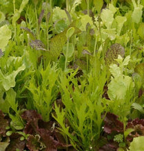 Load image into Gallery viewer, West Coast - Mustard Greens Blend