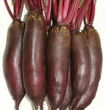 Load image into Gallery viewer, West Coast - Taunus Beet Seeds