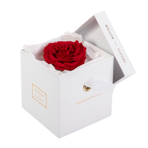 Long-Life Solitary Rose in Small Square Box