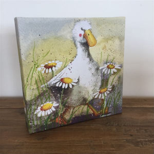 Duck In Daisies Small Canvas