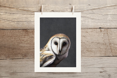 Barn Owl Limited Edition Giclee Print