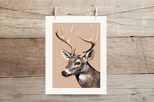 Deer Limited Edition Giclee Print