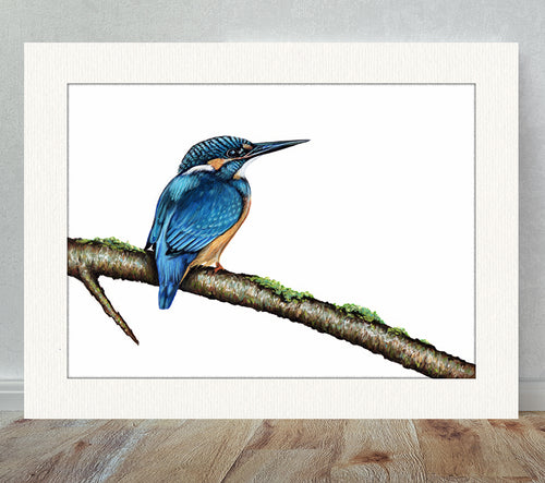 Kingfisher Limited Edition Giclee Print