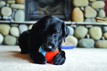 Load image into Gallery viewer, Chuckit Indoor Ball Dog Toy