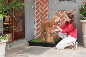 PetSafe Pet Loo Portable Dog Potty | Alternative to Puppy Pads
